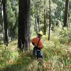 Survey and assessment of standing timber and biodiversity values.